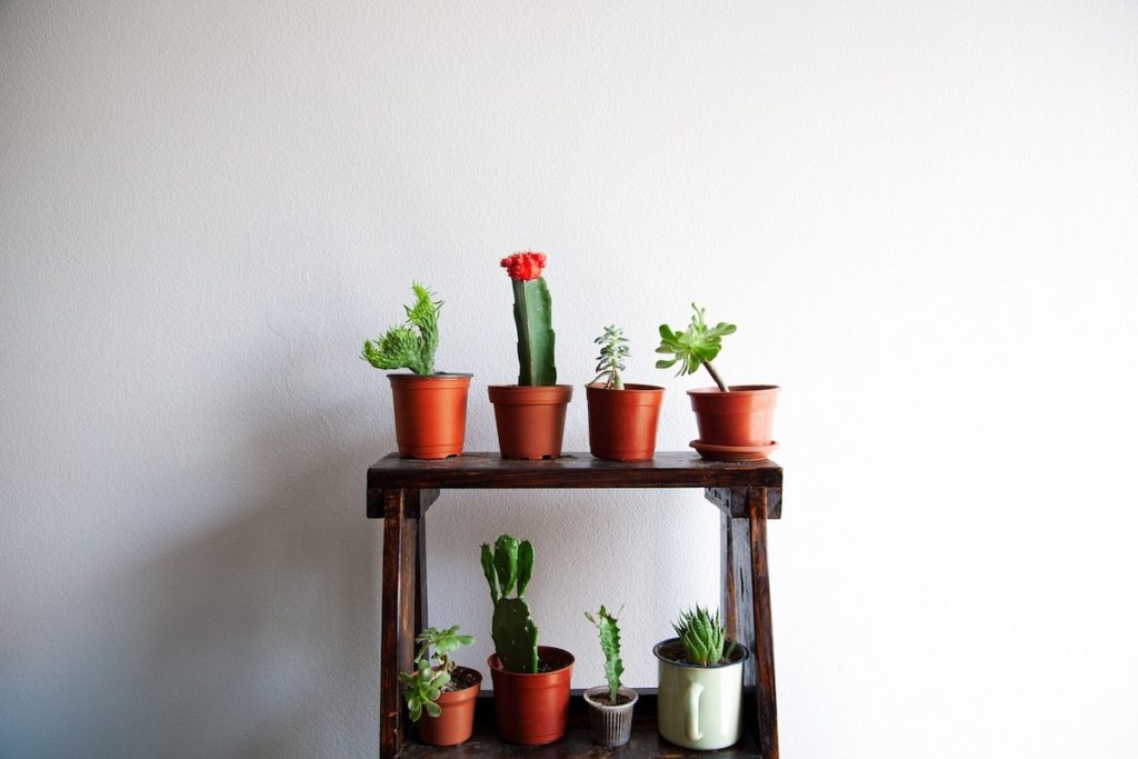 caring indoor succulents is easy