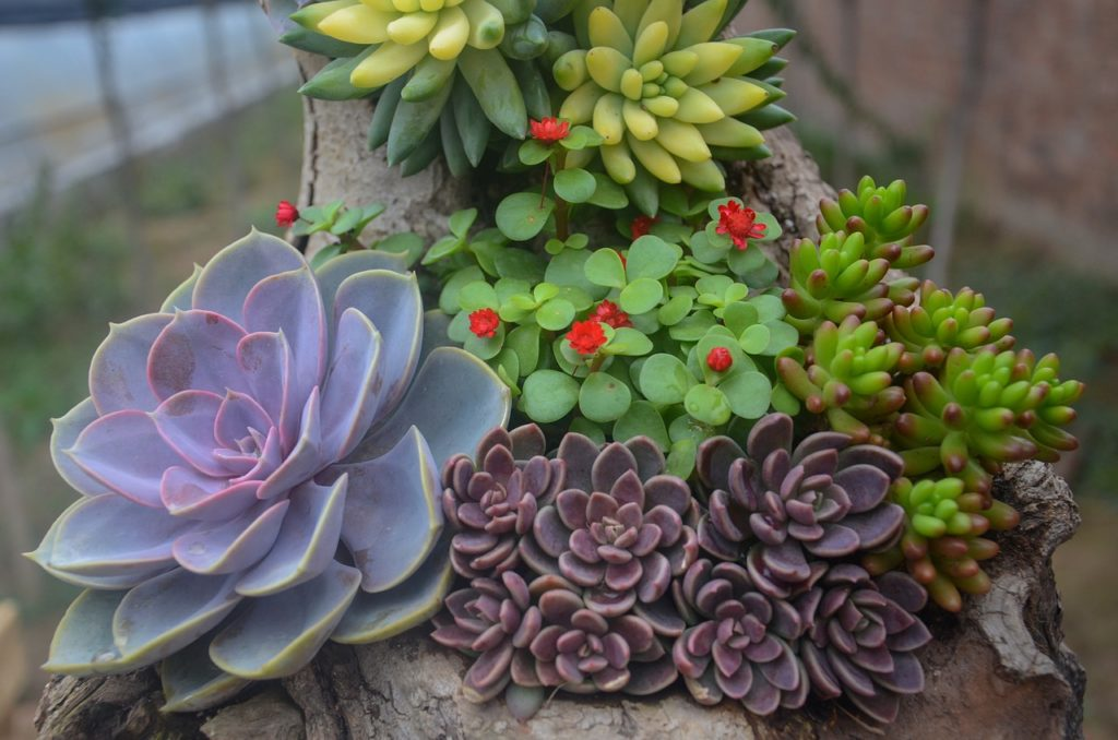 stretched succulents