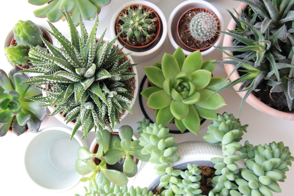 how often should you water succulents?