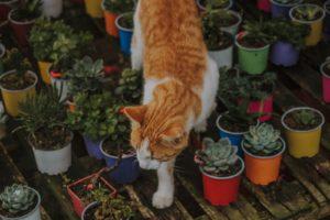 cat around safe succulents