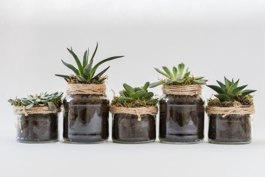 five succulent plants